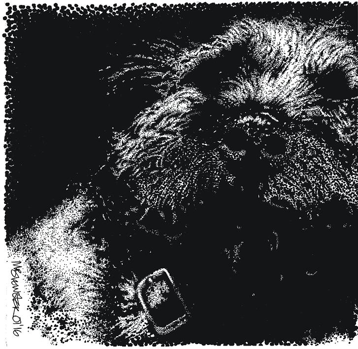 Border terrier pet portrait