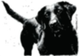 Black lab pet portrait