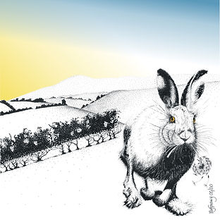 square blank greetings card of a hare near Machynlleth