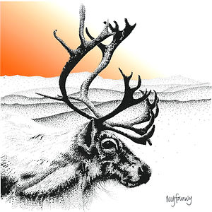 Blank greetings card of a reindeer