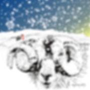 Horny ram with Cadair Idris Christmas card