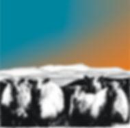 square blank greetings card of sheep with Cadair Idris