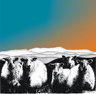 square blank greetings card of sheep with Cadair Idris
