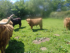 sheep-small grey sony 123.JPG