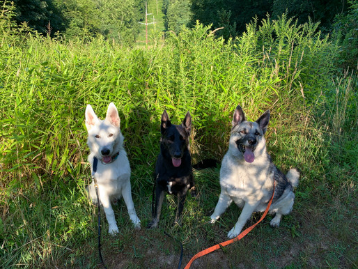 Dogs of the Month-October 2020
