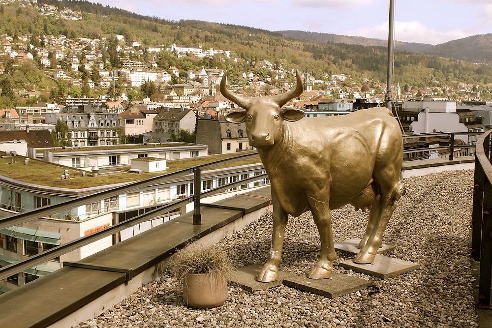 Kuh auf Terrasse