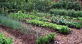8-Traditional-Garden-Plot.jpg