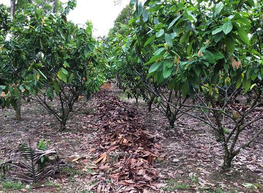 Cocoa grants applications open