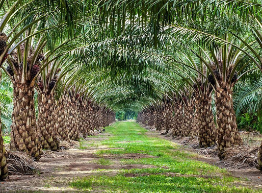 Oil palm price stable at K2,396