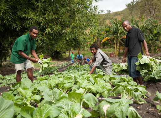 Agriculture To Get Added Boost With US$40m Loan