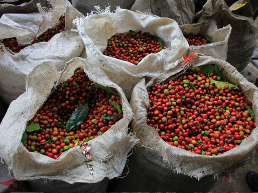 Coffee Needs to be Marketed Better to International Consumers