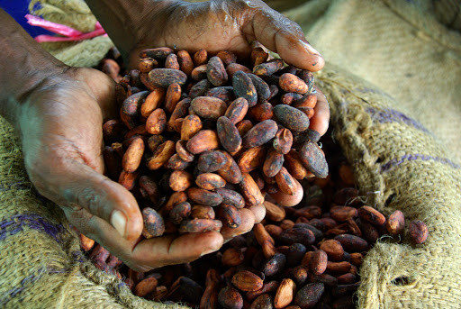 Cocoa production falls by 23pc