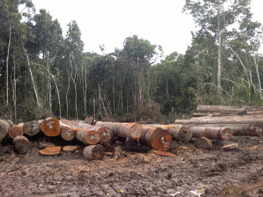 Tate: Log Export Tax a Failed Policy