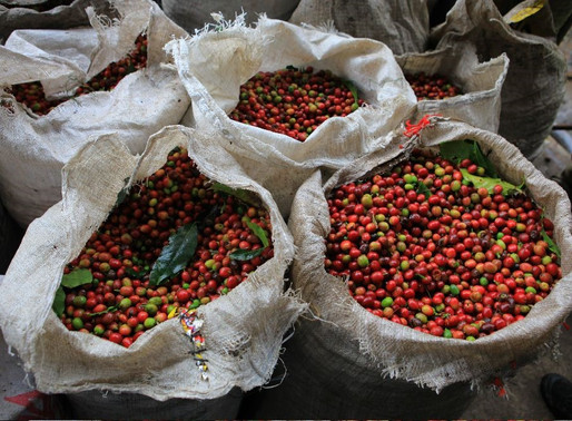PNG Agriculture Exports Drop