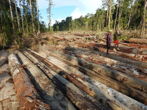 Logging Project in Bouganville to Start Next Month
