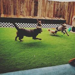 Super intense game of tag! 😂_•_•_•_#dog
