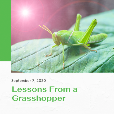 Lessons from a Grasshopper