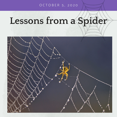 Lessons from a Spider
