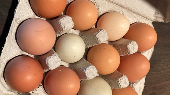 Dozen Eggs from Soy-Free Pastured Chickens
