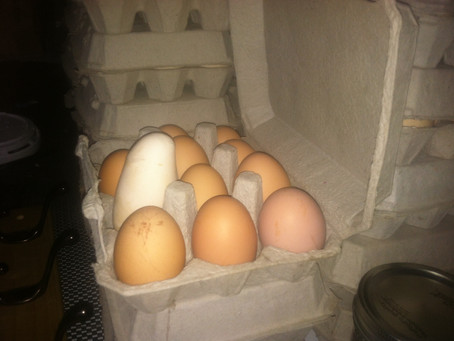 Egg Cartons: Return them if they're OK