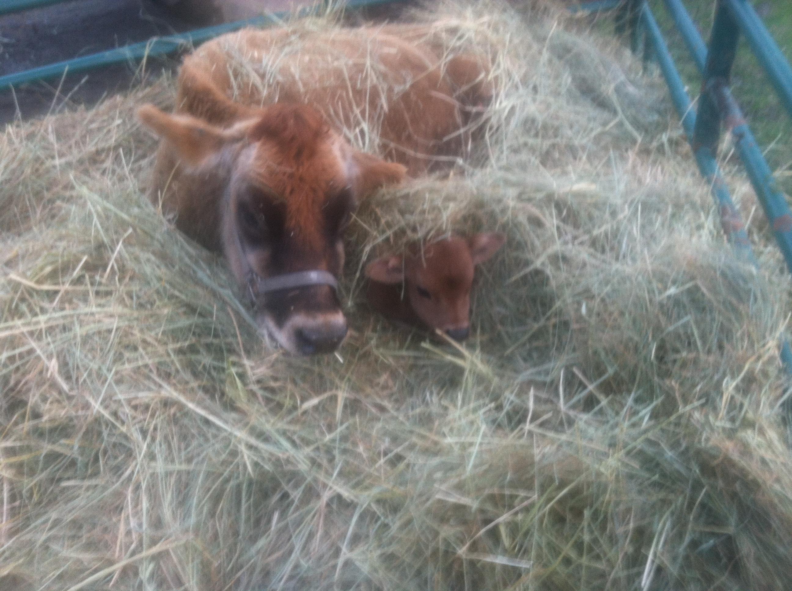 Birth, death, winter, and wild hogs | Helios Farms