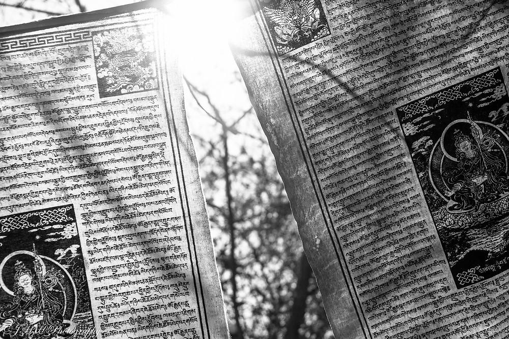 Sunlight and Prayers for web.jpg