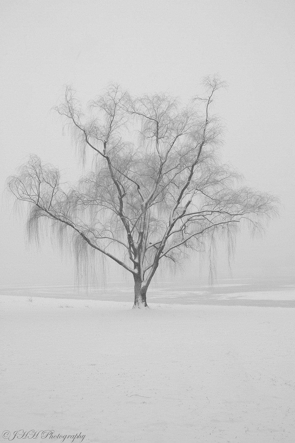 Wintry Willow for web.jpg