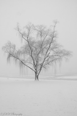 Wintry Willow