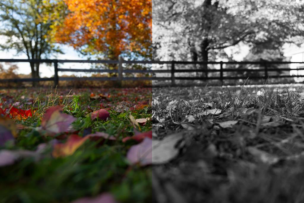 GG Autumn Half and Half web size