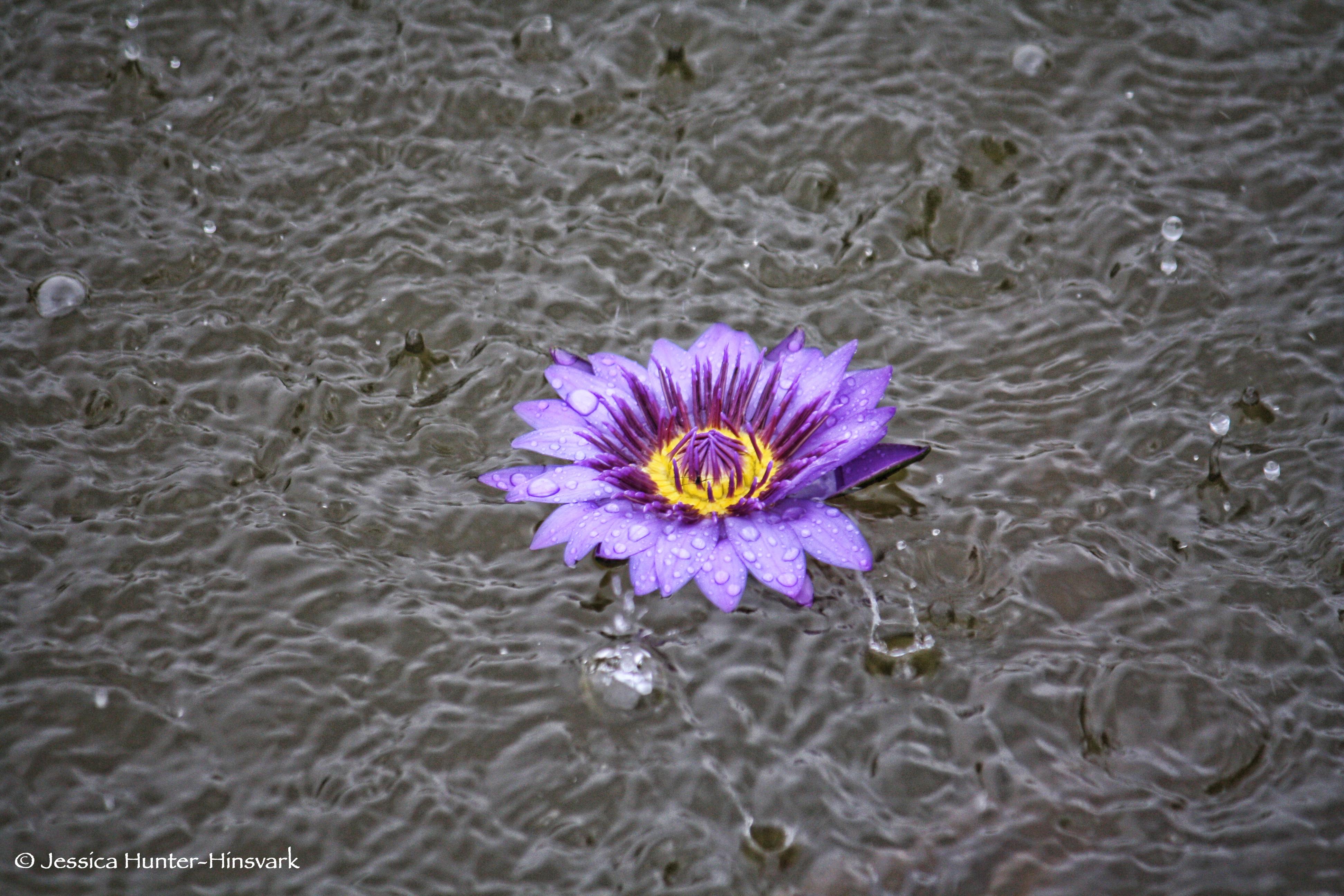 Purple+Rain+for+web.jpg