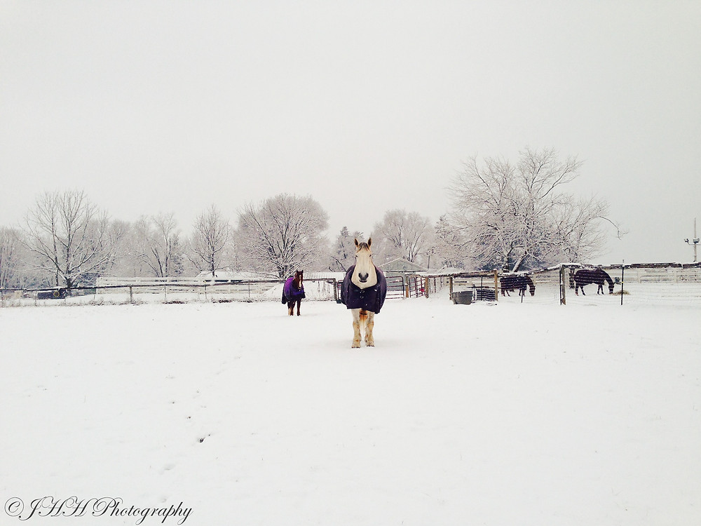 In Snowy Pastures for web.jpg