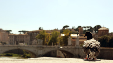Rome, Italy - Ağustos 2013