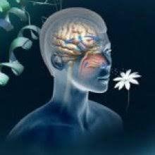 Séance olfacto-énergétique