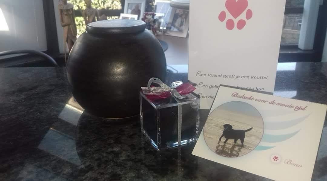 Een speciale urne voor uw geliefde huisdier