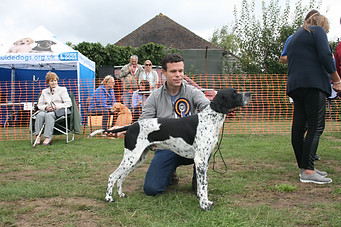 RESERVE BEST IN SHOW - LUIS