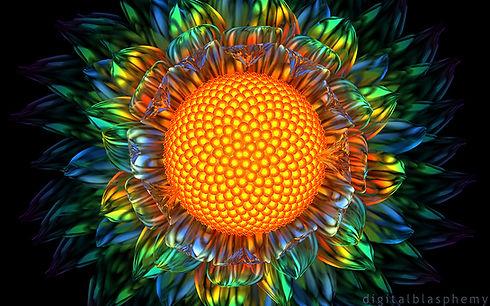sunburstdaisy1fb.jpg