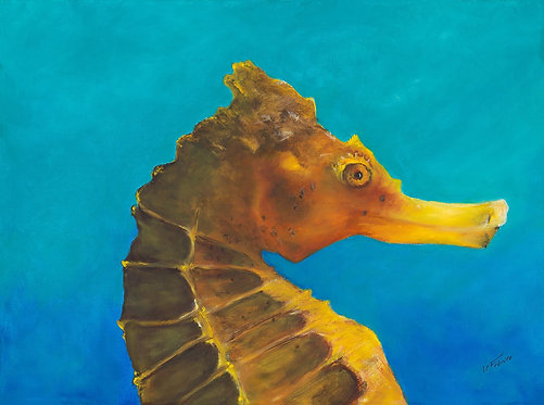 Portrait of a Sea Horse