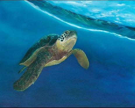 Jonathan Livingston Sea Turtle