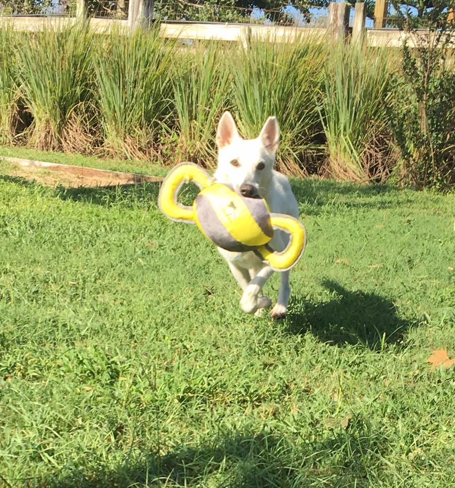Layla running toy