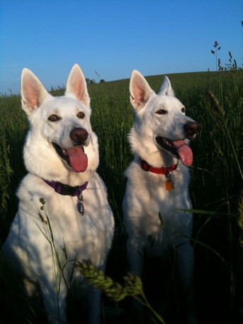 Sadie and Asha