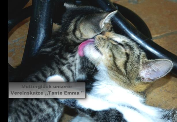 Tante Emma bekommt Babys.