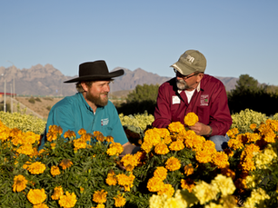 Finding Photos for NMSU Extension Network