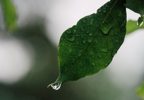 Breakthrough Solar Panel Can Harvest Power From Raindrops - Day or Night