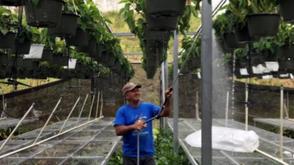 How Solar Energy Saved A Puerto Rican Farm From Hurricane Maria