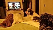 Dogs watching tv.jpg