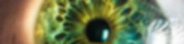 Iris grün.jpg
