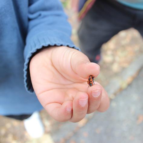 Coin de nature à l'école