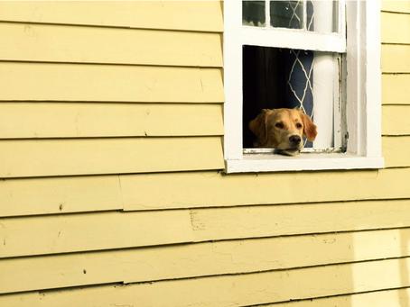 Darf ich bei einer Ausgangssperre wegen Corona mit meinem Hund Gassigehen?