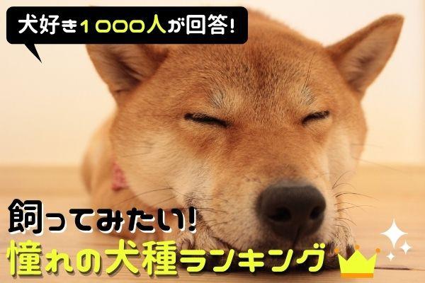 飼ってみたい憧れの犬種ランキング