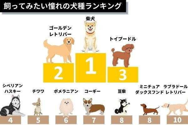 飼ってみたい憧れの犬種ランキング!1位は「柴犬」